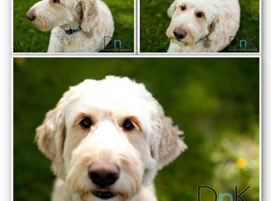 Mr Max // Minneapolis Pet Photographer